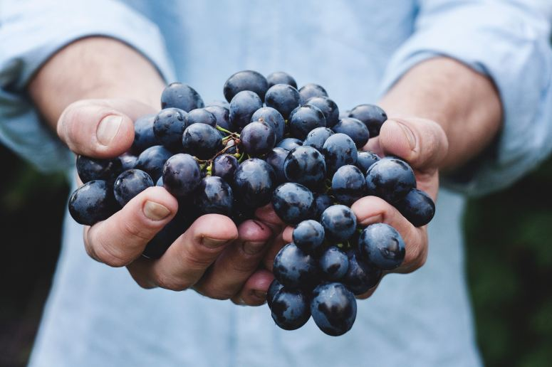 Export - Grapes